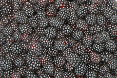 Black Raspberry Background Royalty Free Stock Images