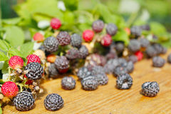 Black raspberry with berries and leaves on the boards Royalty Free Stock Images
