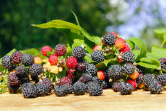 Black raspberry with berries and leaves on the boards Stock Photo