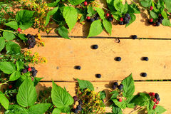 Black raspberry with berries and leaves on the boards Royalty Free Stock Photos