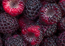 Black raspberry Cumberland. Closeup background Royalty Free Stock Photography