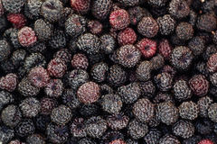 Black raspberry Royalty Free Stock Photos