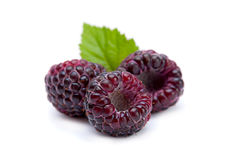 Black raspberry Cumberland Royalty Free Stock Photos