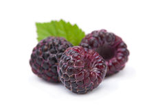 Black raspberry Cumberland Stock Images
