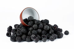 Black Raspberry Cumberland isolated. On white background Royalty Free Stock Photos
