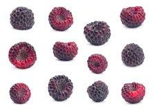 Black raspberry Cumberland set Royalty Free Stock Images