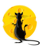 Black rat eating yellow cheese  illustration Stock Photography