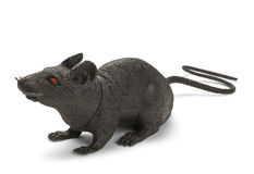 Black Rat. Black Plastic Toy Rat Isolated on a White Background Royalty Free Stock Images
