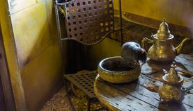 Black rat sitting on the table, animal pests, historical animal for spreading the plague. A Black rat sitting on the table, animal pests, historical animal for royalty free stock photos