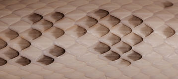 Black Rat Snake scales Stock Image