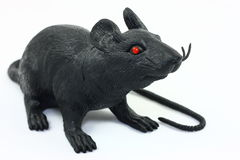 Black Rat On White. A black rubber toy in the shape of a large rat with red eyes photographed on a white background Stock Images