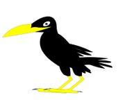 The Black raven. Amusing bird with nature Stock Photos