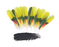 Black raven and amazon parrot feathers Royalty Free Stock Image