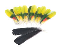 Black raven and amazon parrot feathers Stock Photography