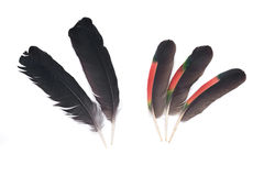 Black raven and amazon parrot feathers Stock Images