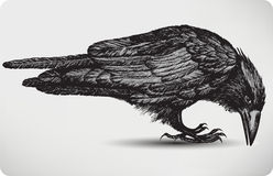 Black raven bird, hand-drawing. Vector illustratio Stock Photos