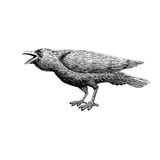 Black raven bird with isolated. hand drawing art. illustration a. D vector. line art with animal Royalty Free Stock Images