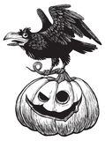 Black raven bird sitting on top of scary Halloween pumpkin. Engraving style Royalty Free Stock Photography