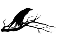 Black raven bird on tree branch vector silhouette Royalty Free Stock Image
