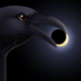 Black raven Royalty Free Stock Photo
