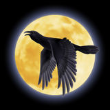 Black raven Stock Images