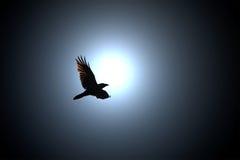 Black Raven Flies against Full Moon Stock Photography
