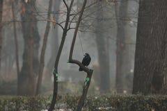 Black raven in the fog.