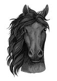 Black raven horse full face artistic portrait Royalty Free Stock Images