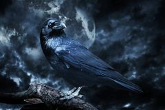 Black Raven In Moonlight Perched On Tree. Royalty Free Stock Photo