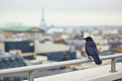 Black raven on a roof in Paris and looking at the Eiffel tower Stock Photography