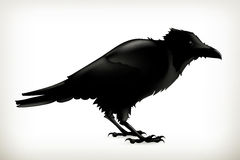 Black raven silhouette. Black raven, vector silhouette, isolated on white background Stock Photography