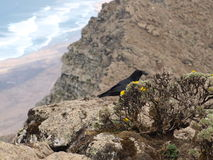 Black raven on the top of mountain Royalty Free Stock Photo