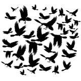Black ravens Royalty Free Stock Photo