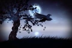 Black ravens at night Royalty Free Stock Image