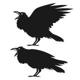 Black ravens set Royalty Free Stock Photo