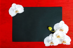 The black rectangle A4 size on a red wooden background decorated with white orchid flowers. Stock Photo