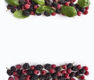 Black and red berries isolated on white. Ripe blackberries, raspberries  and basil leaves on white background. Sweet and juicy ber Royalty Free Stock Photos
