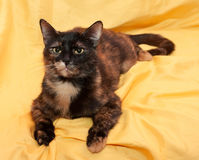 Black and red cat lies on yellow Stock Photos