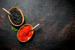 Black and red caviar in bowls with spoons and dill. On dark rustic background royalty free stock photos