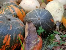 Pumpkins. Black with red colour  Pumpkins Royalty Free Stock Images