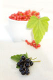 Black and red currant. Fresh red and black currants in the white bowl royalty free stock photos