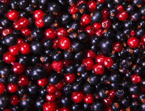 Black and red currant Stock Photos