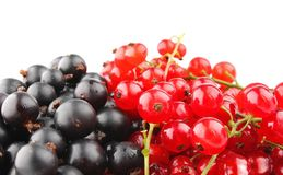Black and red currant Stock Image