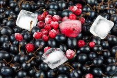 Black and red currant. Placer of black currant and red frozen currant with ice cubes Royalty Free Stock Photos