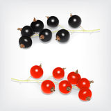 Black and red currant Royalty Free Stock Photography