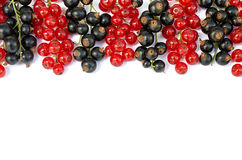 Black and red currant d Royalty Free Stock Image