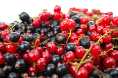 Black and red currant isolated Royalty Free Stock Images