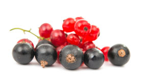 Black and red currant isolated Stock Image