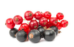 Black and red currant isolated Stock Photos