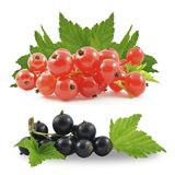 Black and red currant Stock Photo